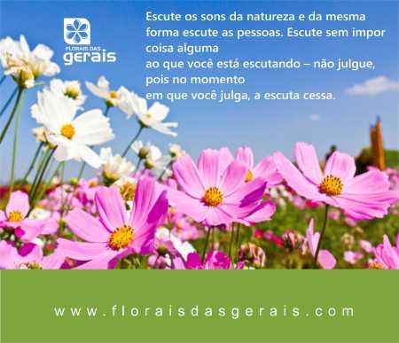 loja Florais das Gerais