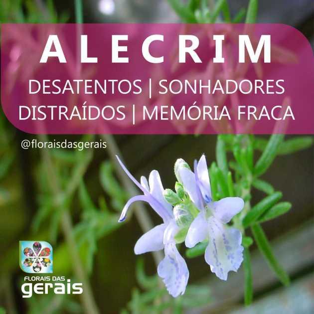 foto alecrim 2